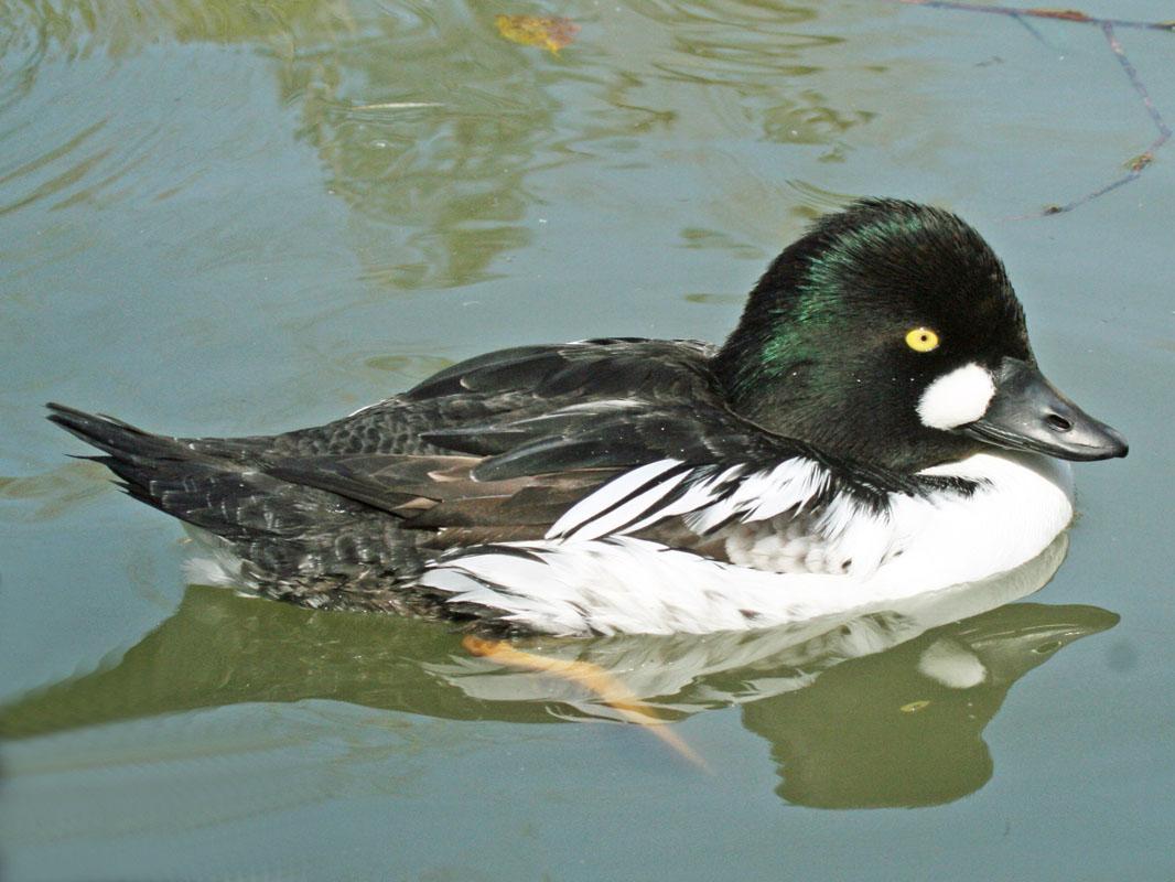 Хищные птицы калужской области фото с названиями только ловля